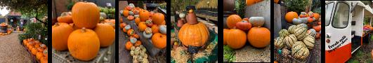 pumpkin-banner.png