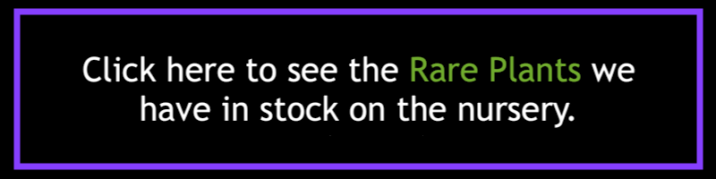 rare-palnts-in-stock-2.png