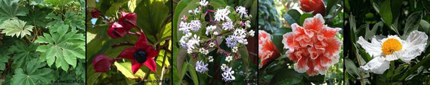 rare-plants-new5.jpg