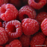 raspberry-autumn-bliss-square.png