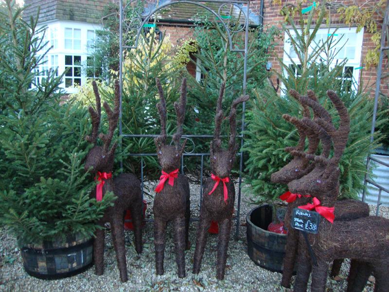 reindeers-and-trees.jpg