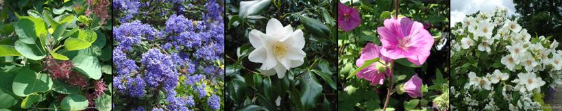 shrub-banner12.jpg