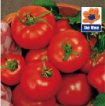 tomato-seed.png
