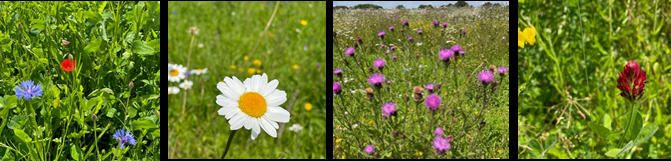 wildflower-banner.png