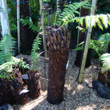 3ft Tree Fern
