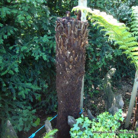 4ft Tree Fern