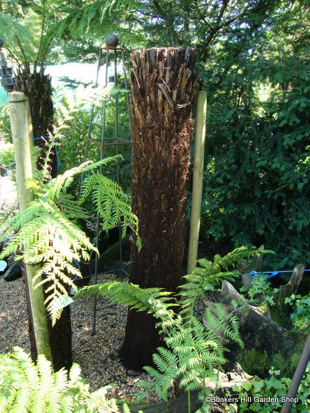 6ft Tree Fern