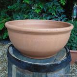 Bulb Bowl - Medium