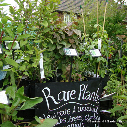 View of rare plants in the nursery