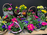 Gift basket of flowering plants