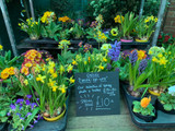 'Cheer-me-ups' - 8 colourful spring plants and bulbs