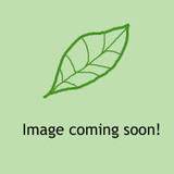 Agapanthus 'Mi Casa' - 3ltr pot