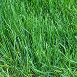 Johnsons 'Luxury Lawn' lawn seed - 1kg (for 40sq m)