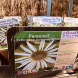 Echinacea purpurea 'White Swan' 1ltr