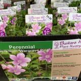 Geranium 'Wargrave Pink' 1ltr