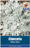Cineraria 'Silver Dust' Seeds