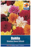 Dahlia 'Unwin Dwarf Mixed' Seeds