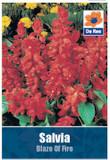 Salvia 'Blaze of Fire' Seeds