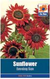 Sunflower 'Evening Sun' Seeds