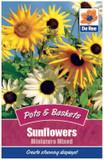 Sunflowers 'Miniature Mixed' Seeds