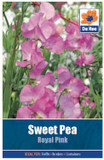 Sweet Pea 'Royal Pink' Seeds