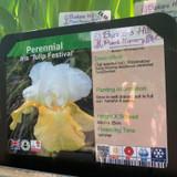 Iris 'Tulip Festival' 1ltr