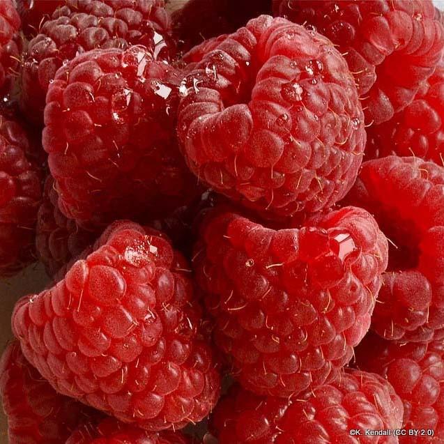 Raspberry 'Glen Ample'