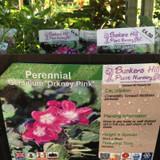 Geranium 'Orkney Pink' 1ltr
