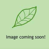 Geranium phaeum 'Album' 1ltr