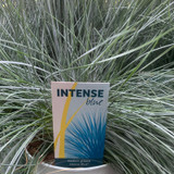 Festuca 'Intenz Blue' (Grass)