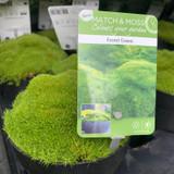 Forest Green Moss