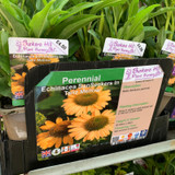 Echinacea Sunseekers in Tanz Mellow 1ltr