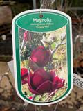 Magnolia x Genie - 20 ltr