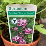Geranium 'Attar of Roses' (11cm)