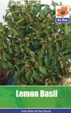 Lemon Basil Seeds