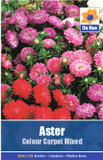 Aster 'Colour Carpet Mixed' Seeds