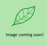 Geranium Rozanne - 5ltr pot