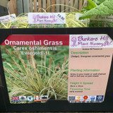 Carex oshimensis 'Evergold' (Grass) 1ltr pot