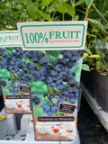 Blueberry 'Bluecrop' (Vaccinium)