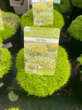 Lime Green Moss