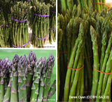 Asparagus Crown -  Mixed selection x 9