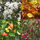 Deluxe Mixed Native Hedging - 25 plants PRE ORDER FOR LATE NOVEMBER