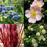 Popular Mixed Native Hedging - 25 plants PRE ORDER FOR LATE NOVEMBER