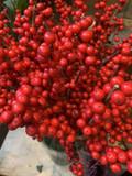 Christmas ilex stems (berries) Short or Long