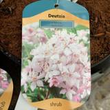 Deutzia rosea Mont Rose - 2ltr pot