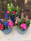 Glazed Garden Pot Arrangement