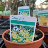 Cowslip (11cm)
