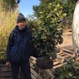 Prunus laur. 'Etna' (Cherry Laurel) 100-125cm