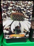 Echinacea purp. 'Pow Wow White'