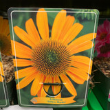 Echinacea 'Yellow Shades'